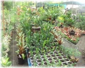 Simply Petals Garden Providing Quality Landscape Services